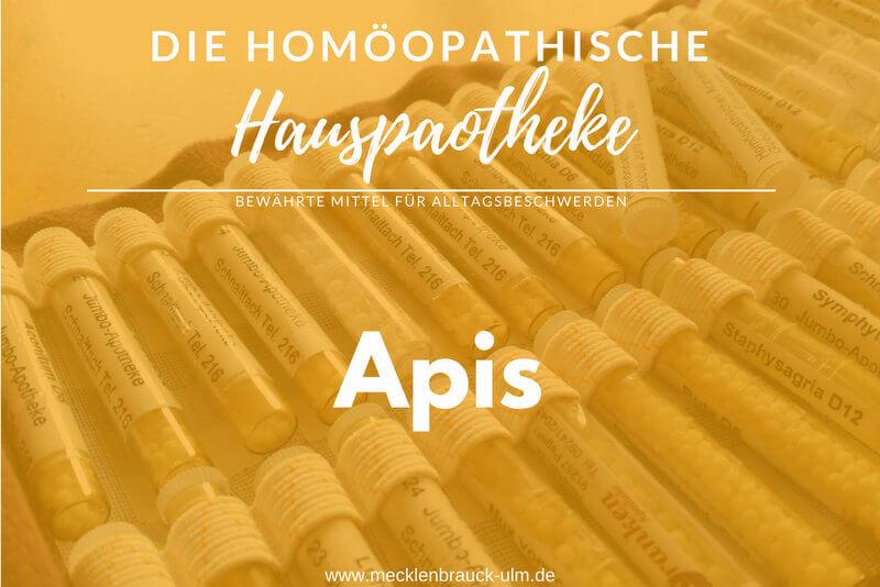 Apis mellifica – Honigbiene