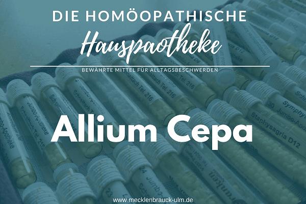 Allium Cepa – Küchenzwiebel